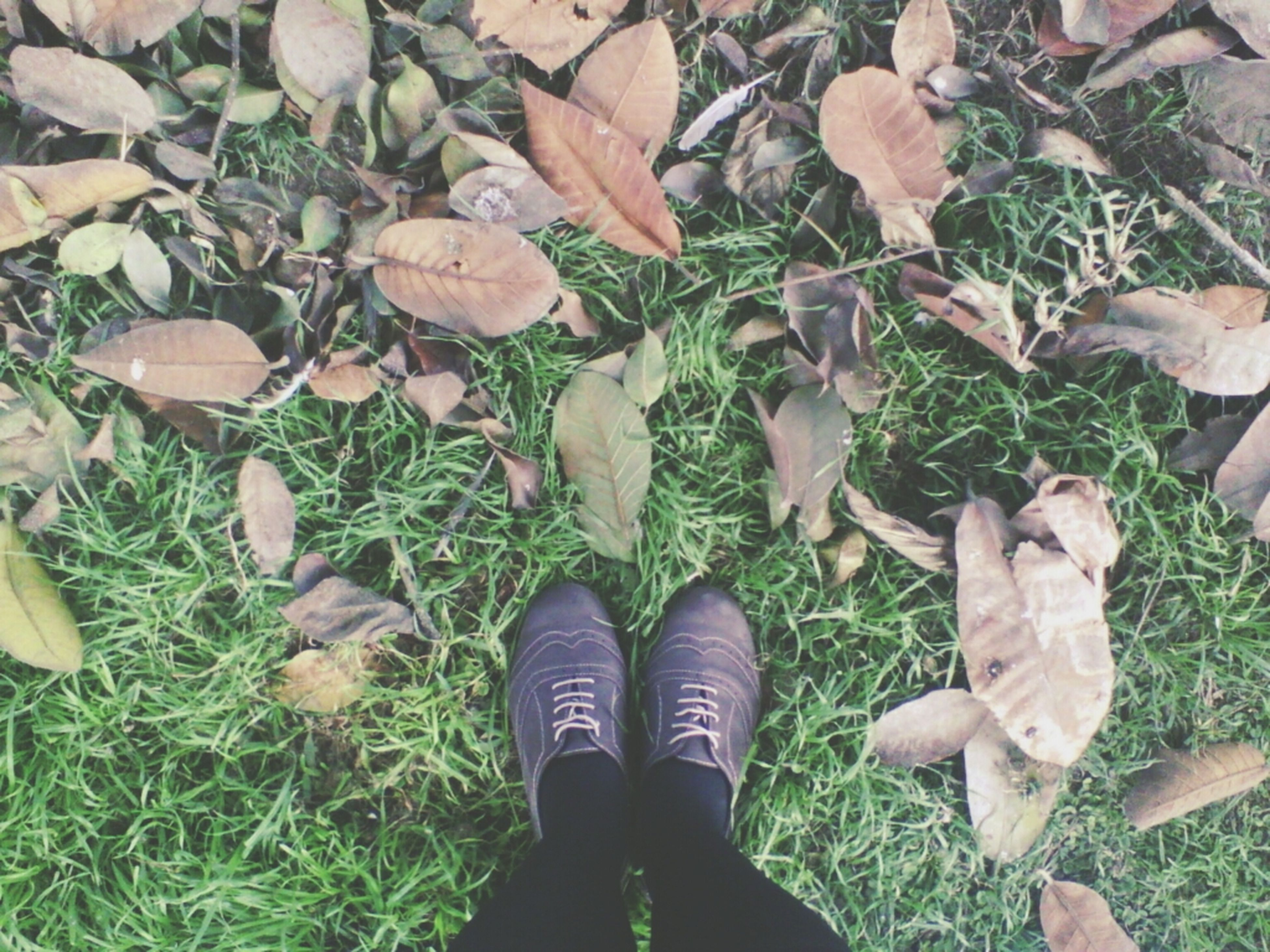 low section, shoe, leaf, person, autumn, standing, grass, personal perspective, high angle view, leaves, field, change, dry, lifestyles, season, fallen, men