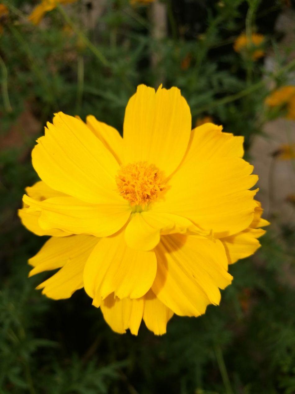 Beautiful Flower, Natural Color, Freshness Beauty In Nature Eyeemphotography Eyemtime EyeEm Gallery Niceshots Nature Natural Beauty Smile :) No Editing <3 EyeEm Best Shots - Nature Eyemphotos