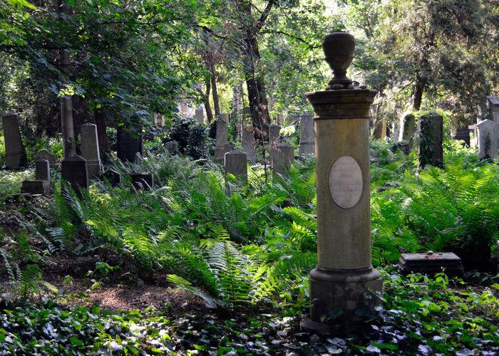 Cemetery Cmentarz Cmentarzżydowski Fern Grave Tomb Tranquil Scene