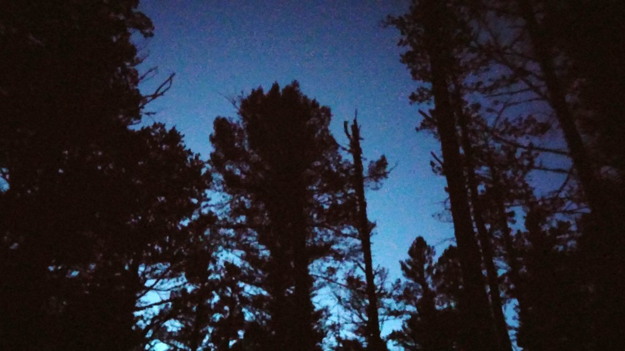 Lights At Dusk Shroomin' Camping Trees Blue Bluesky Andventure Trippy In The Middle Of Nowhere