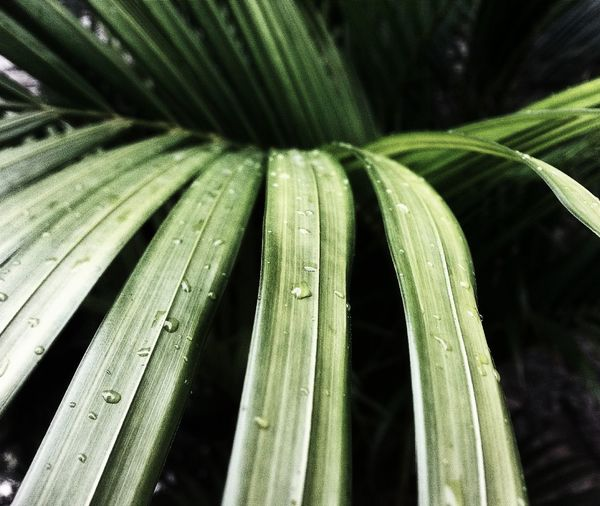 Backgrounds Close-up Day Drop Freshness Green Color Growth Leaf Nature No People Outdoors Plant Purity Water Wet