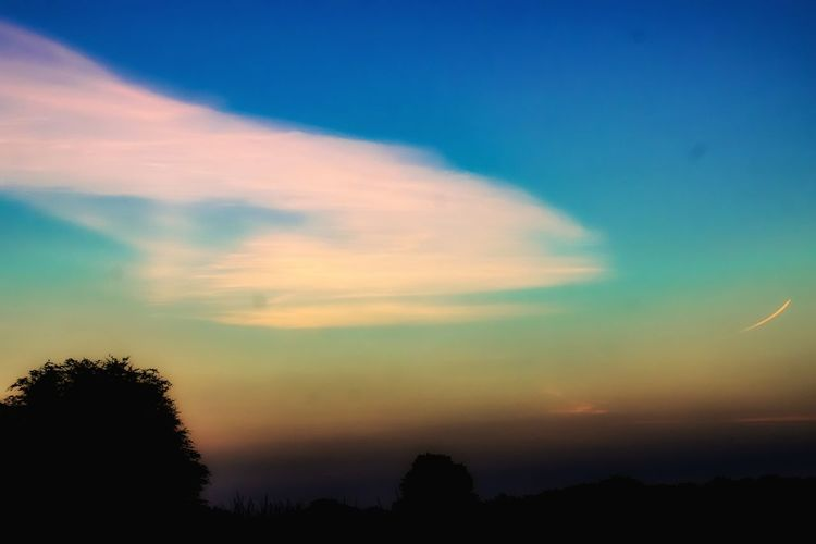 Tree Multi Colored Sunset Dramatic Sky Nature Sky Silhouette Outdoors Cloud - Sky Forest Scenics No People Pinaceae Blue Beauty In Nature Pine Tree Awe Landscape Night Tree Area Sunrise Day From My Point Of View Eye4photography  Capture The Moment