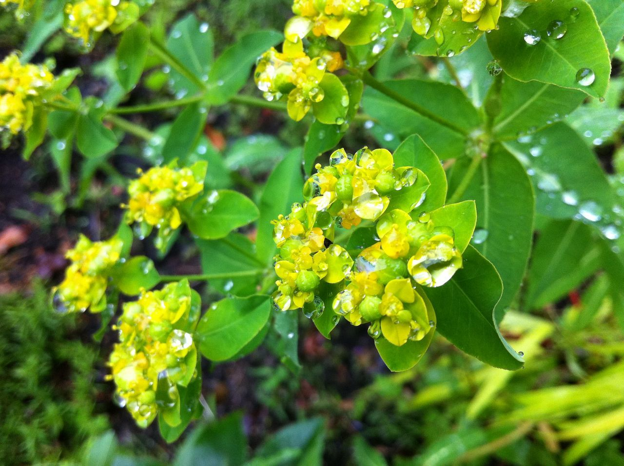 green color, leaf, plant, growth, nature, beauty in nature, day, outdoors, no people, fragility, flower, freshness, close-up, flower head