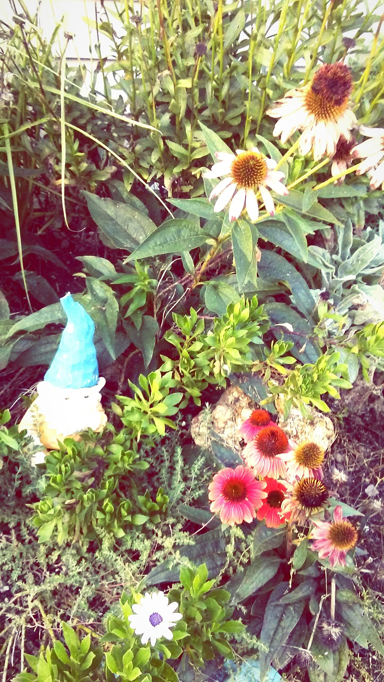 Whisper your secrets to the flowers, they will never tell Plant Growth Green Color Leaf Nature Outdoors Beauty In Nature No People Flower Day Tree Flower Head Close-up Gnome Gnome Home