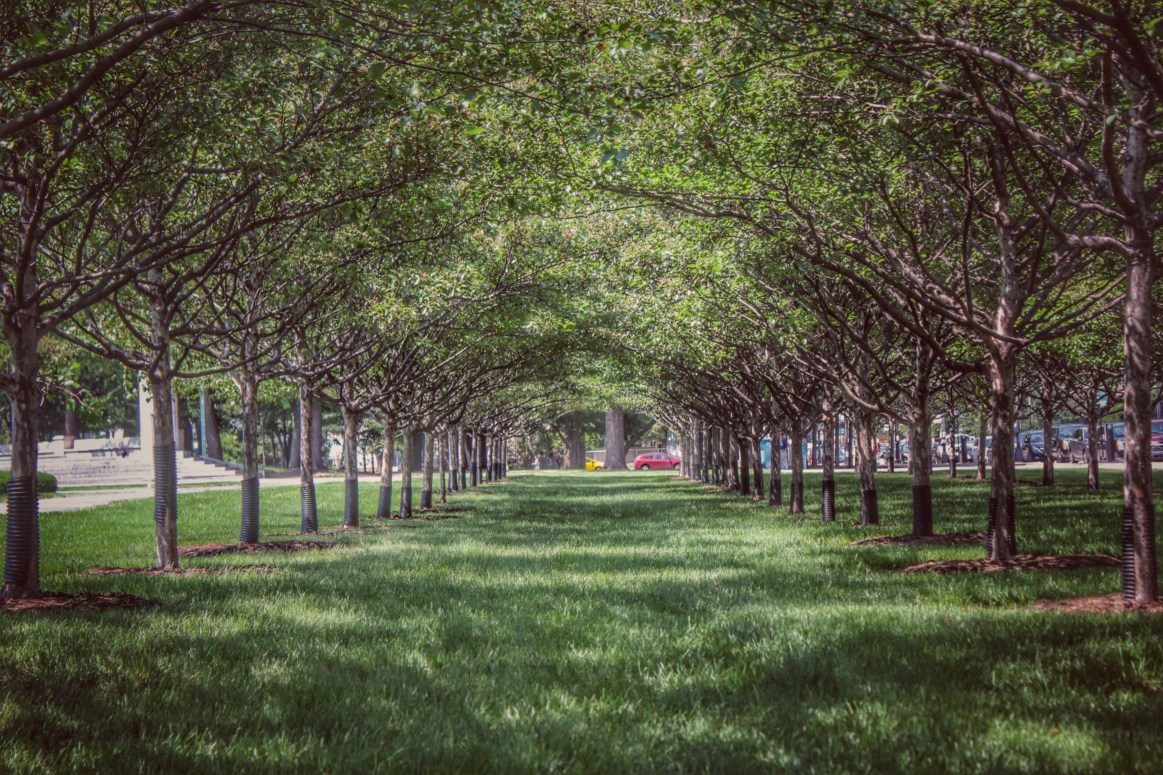 tree, grass, the way forward, green color, growth, park - man made space, treelined, diminishing perspective, footpath, nature, tranquility, branch, vanishing point, park, tranquil scene, walkway, pathway, beauty in nature, tree trunk, in a row