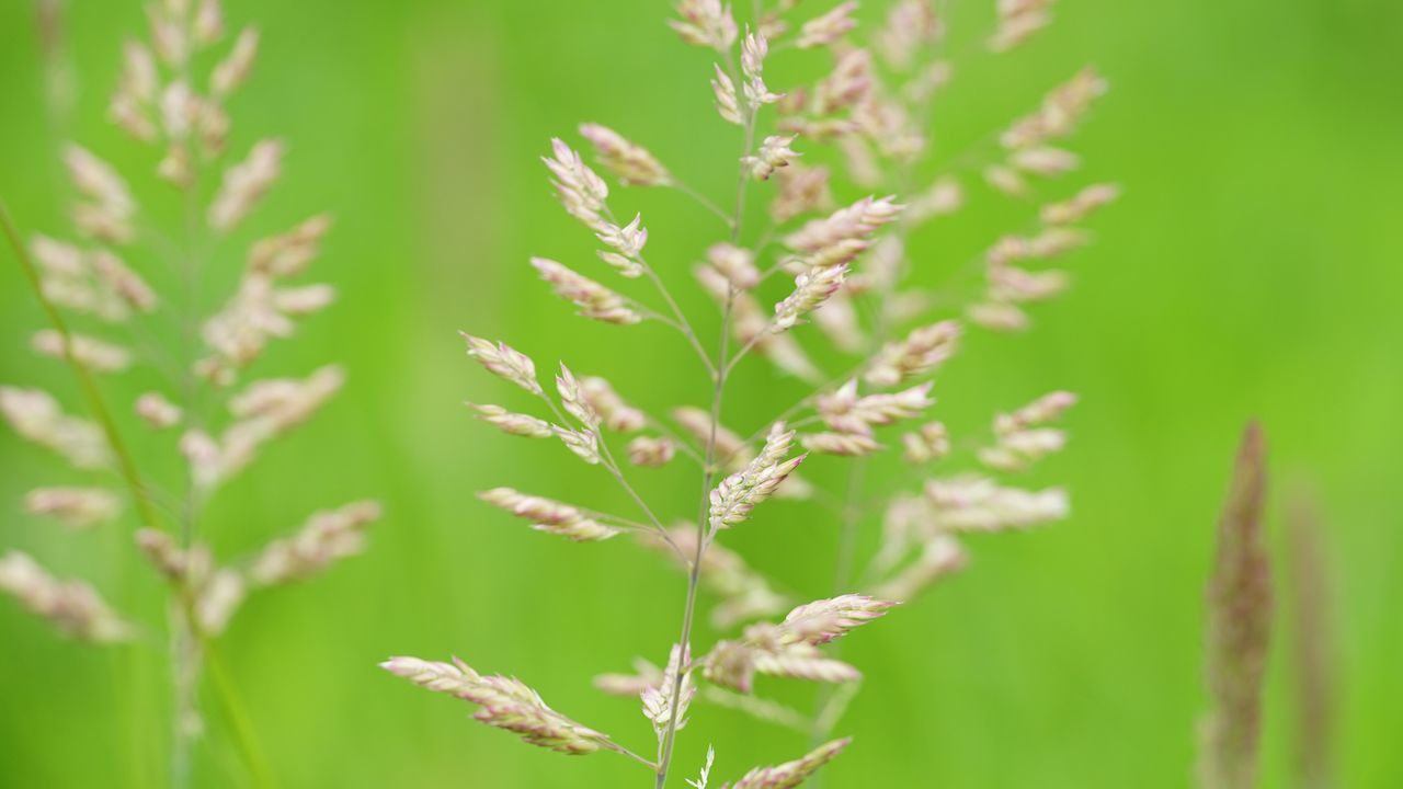 Plant Growth Nature No People Day Green Color Close-up Field Beauty In Nature Outdoors Tranquility Grass Leaf Fragility Freshness Daylight Grass Area Leaves Outdoor Low Angle View Grassland Green Nature Grassy Springtime Plant