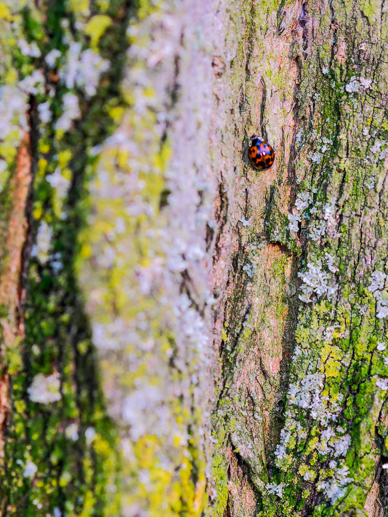 Animal Themes Bark Close-up Insect Ladybeetle Nature One Animal Textured