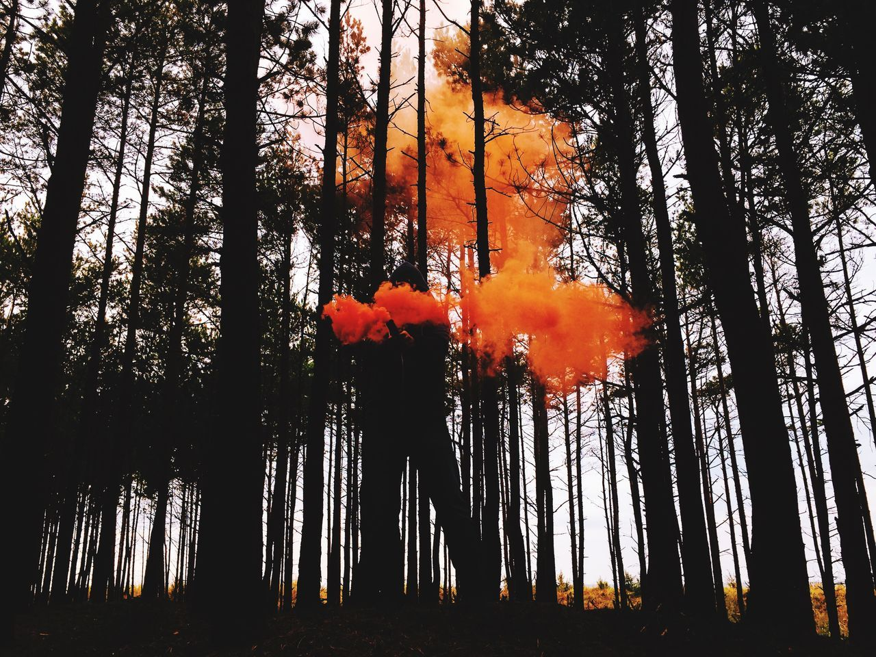 Forest Trees Landscape Model Flare Smoke Eye4photography  EyeEm Nature Lover EyeEm Best Shots IPSScenery