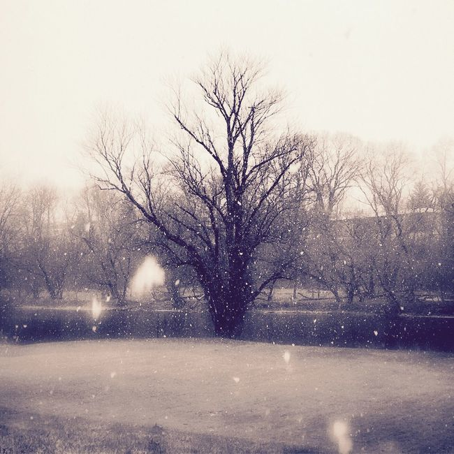 Snow Snowflakes Hugging A Tree Deepfreeze How's The Weather Today?
