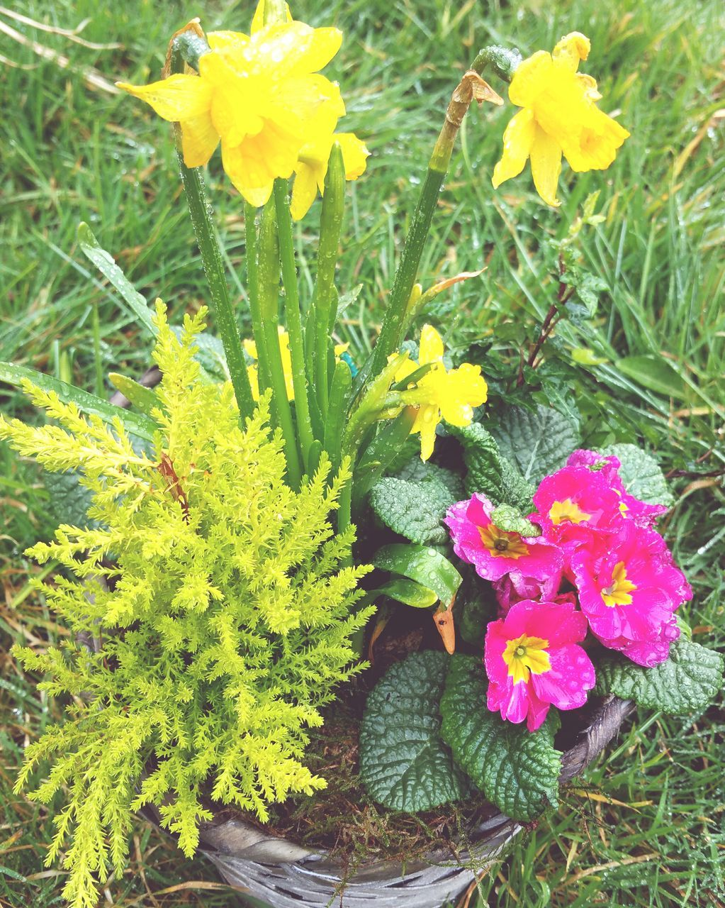 High Angle View Of Pink And Yellow Flowers Blooming On Potted Plant At Park