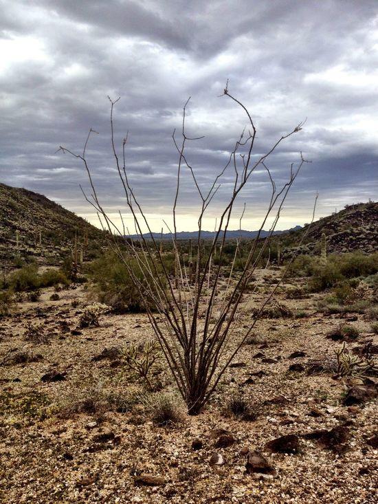 Beautiful Nature Sky_collection Horizon Sky And Clouds Sky Arizona Nature Nature Photography Landscape Photography Landscapes Landscape_photography Mountain Desert Nationalpark