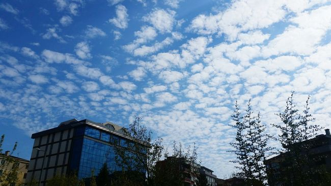 Tree Low Angle View Sky Building Exterior Cloud - Sky Cloud High Section Day Nature Cloudy Outline