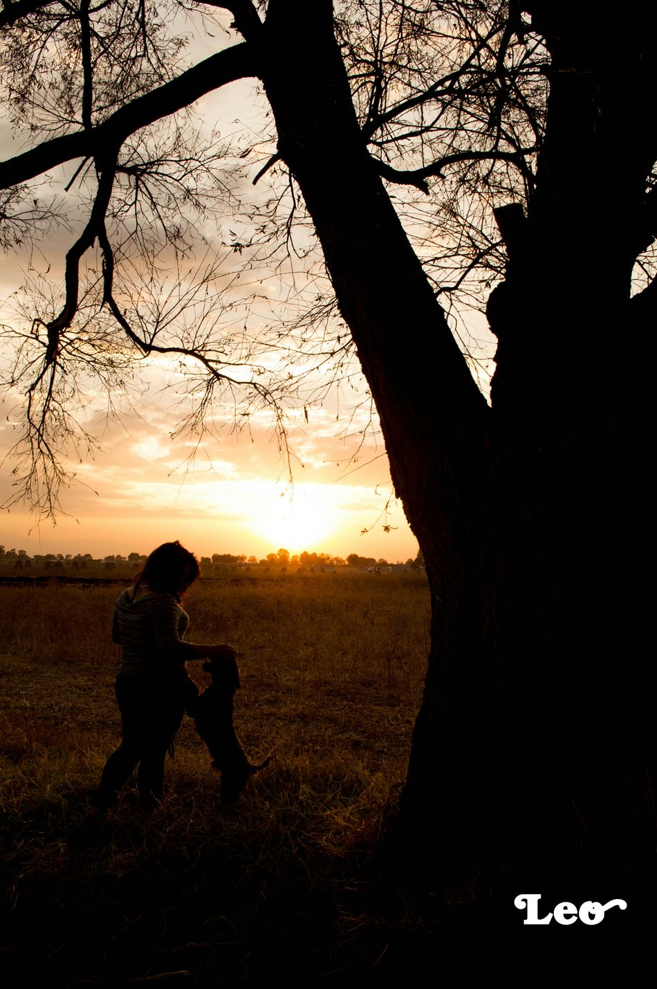 Dogs Relaxing Taking Photos Paisaje Natural árbol Atardecer Nature_collection Collected Community Summer