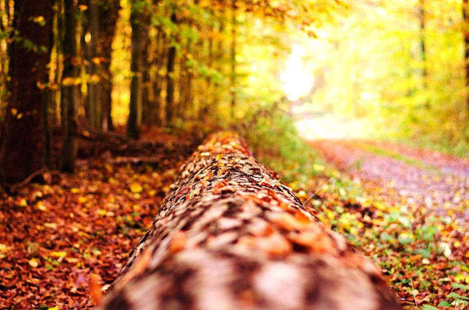 Wald Weg Herbst Autumn Wood Colors Nikon Nikon D5100  50mm 2014