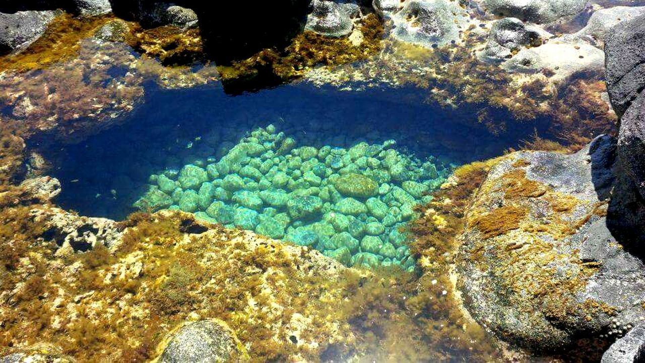 Queen's bath No People Growth Water UnderSea Underwater Beauty In Nature Nature Outdoors Sea Life Close-up Freshness Day Tranquil Scene Tranquility Beauty In Nature Rock - Object Crystal Clear Waters Sea