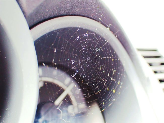 ...trap Spiderweb Speedometer Spiders Taking Photos Hi! Check This Out Hello World Close Up