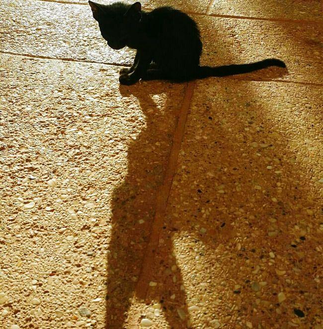 EyeEm Animal Lover Weekend The Eyeem Of Week Cat Cat Lovers Cats Of EyeEm Kitty Caturday Black Cat Photography Black Cat Animals Posing Animal Themes Animal Shadow Batman Cat Shadow