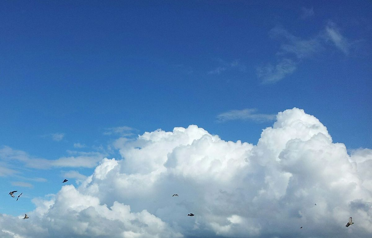 Birds In Flight Swallows Hawk Clouds And Sky Eyem Nature Lovers