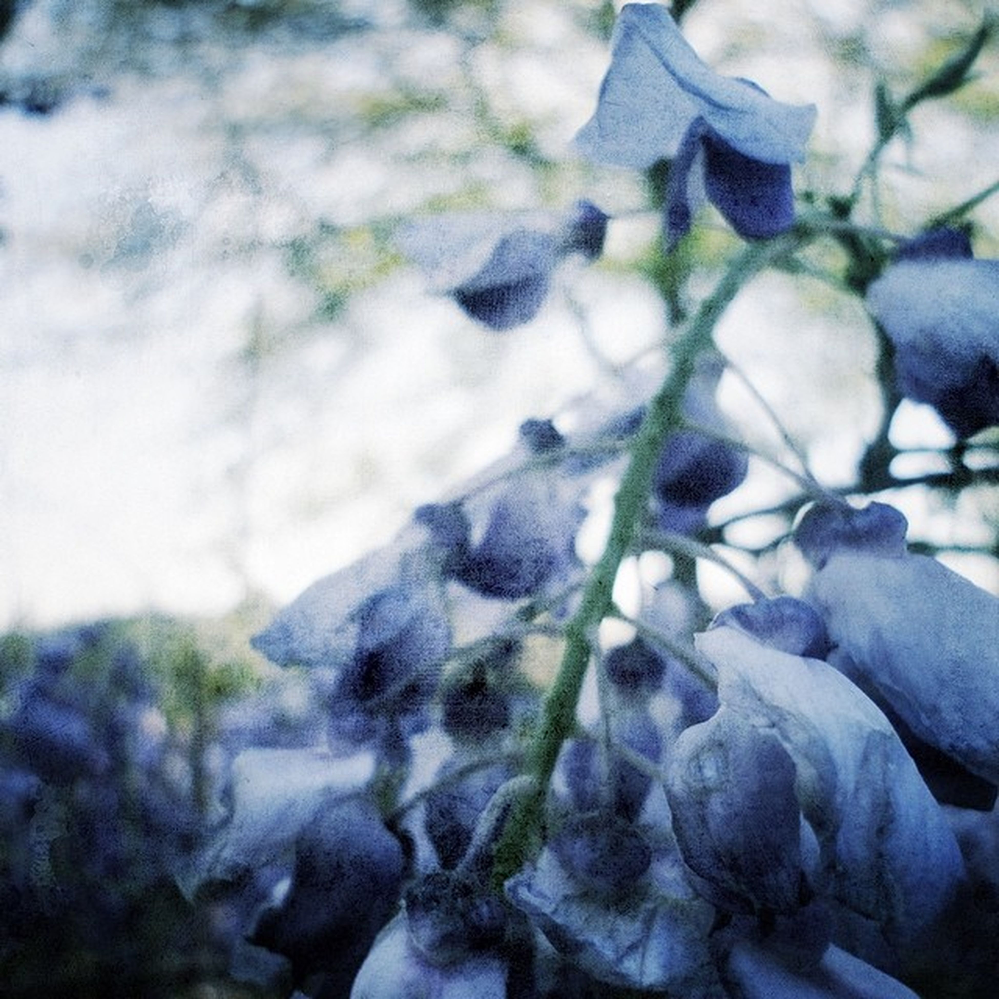 snow, winter, cold temperature, focus on foreground, season, close-up, frozen, nature, weather, covering, beauty in nature, selective focus, tranquility, rock - object, white color, day, outdoors, field, covered, no people