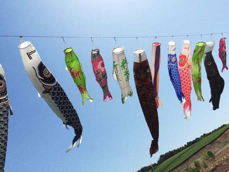 鯉のぼり Sky Japan 茶畑