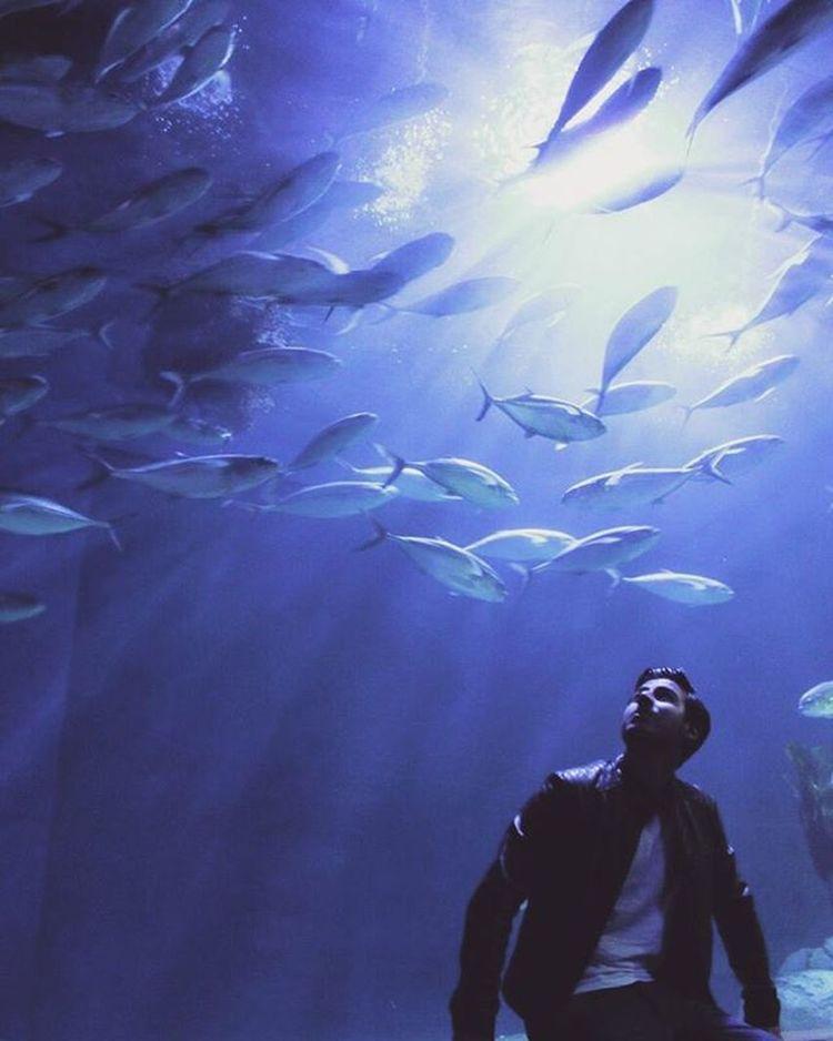 Ciutatdelesartsilesciencies València España València Aquarium Happiness Intotheseas Underthesea Spettacolo Fish Aroundme  Cittadelleartiedellescienze Modernarchitecture Penínsulaibérica Penisolaitalica Autumn2015 Otoño2015 Autunno2015 Fromitalytotheworld Viaggiareèvivere Triplife Complimentialfotografo 😁😁😁 Photocredit @jojo95c