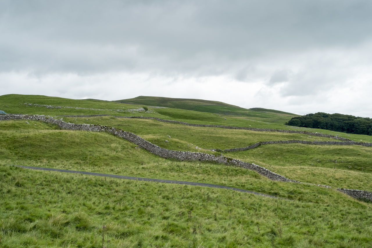 Settle, Yorkshire Dales Beauty In Nature Day Grass Hiking Landscape Meadow Nature Outdoors Scenic Scenics Tranquility Tree Trees Walking Yorkshire Yorkshire Dales Stone Wall