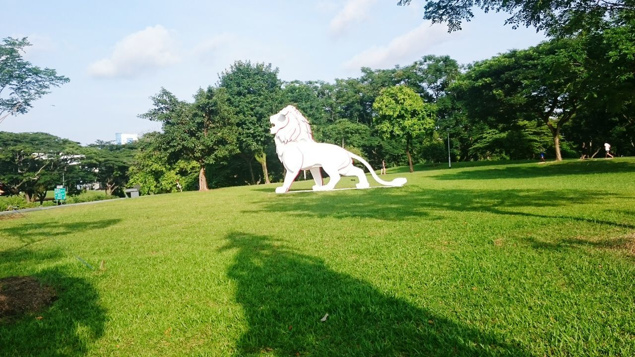 Merlion Bishanpark Bishan Park Panaroma Panoramic Scenery Blue Sky Shadow Grass Silhouette Trees Field
