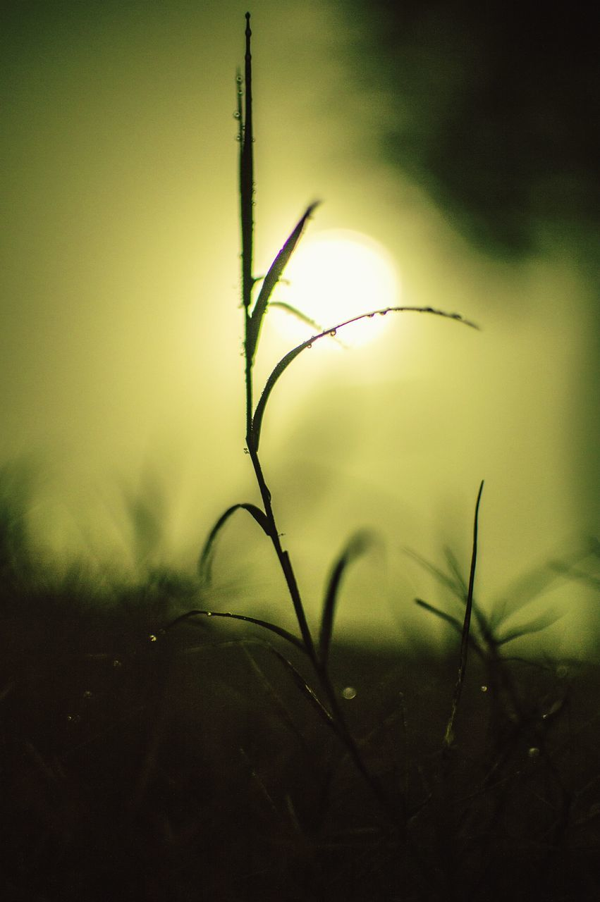 nature, growth, plant, no people, close-up, outdoors, night, beauty in nature, freshness, grass, fragility, sky