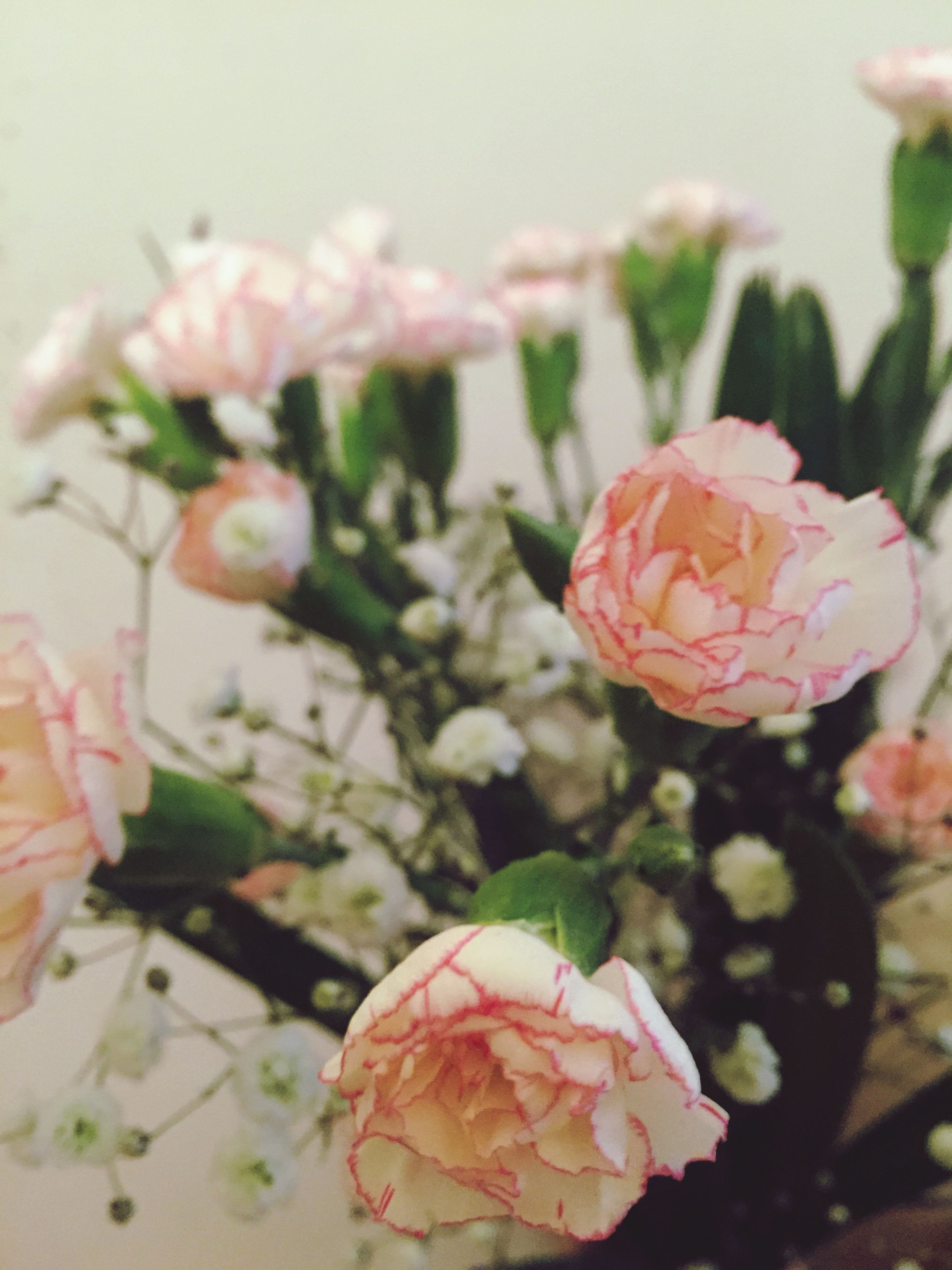 flower, freshness, rose - flower, close-up, indoors, focus on foreground, fragility, red, plant, petal, growth, beauty in nature, nature, pink color, flower head, no people, bud, decoration, leaf, day