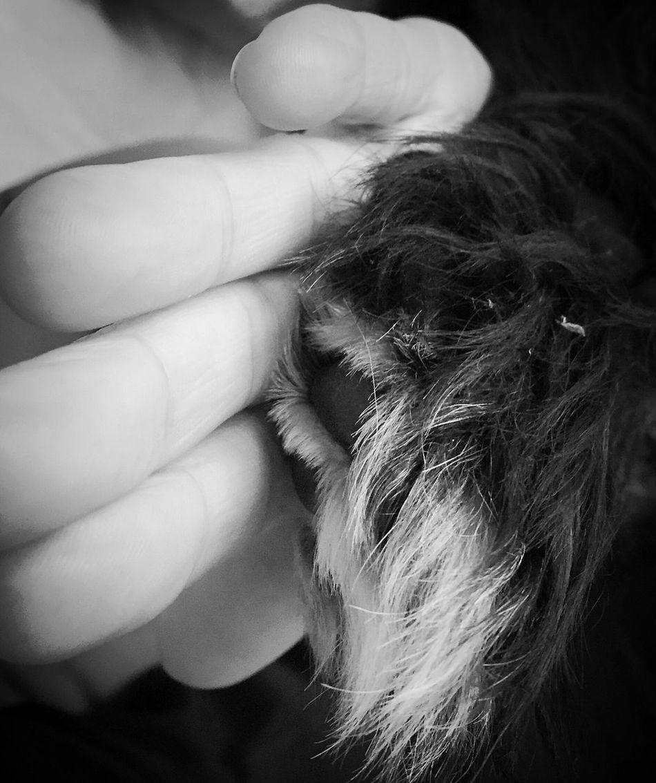 ❤ IPhone Photography EyeEm Best Edits EyeEmbestshots Highfive Eyemphotography Nature Dog Dog Love Handsup  Hand Blackandwhite Black And White Blackandwhite Photography Black And White Photography Black & White Black&white Friends Bestfriend Bestfriends Bff