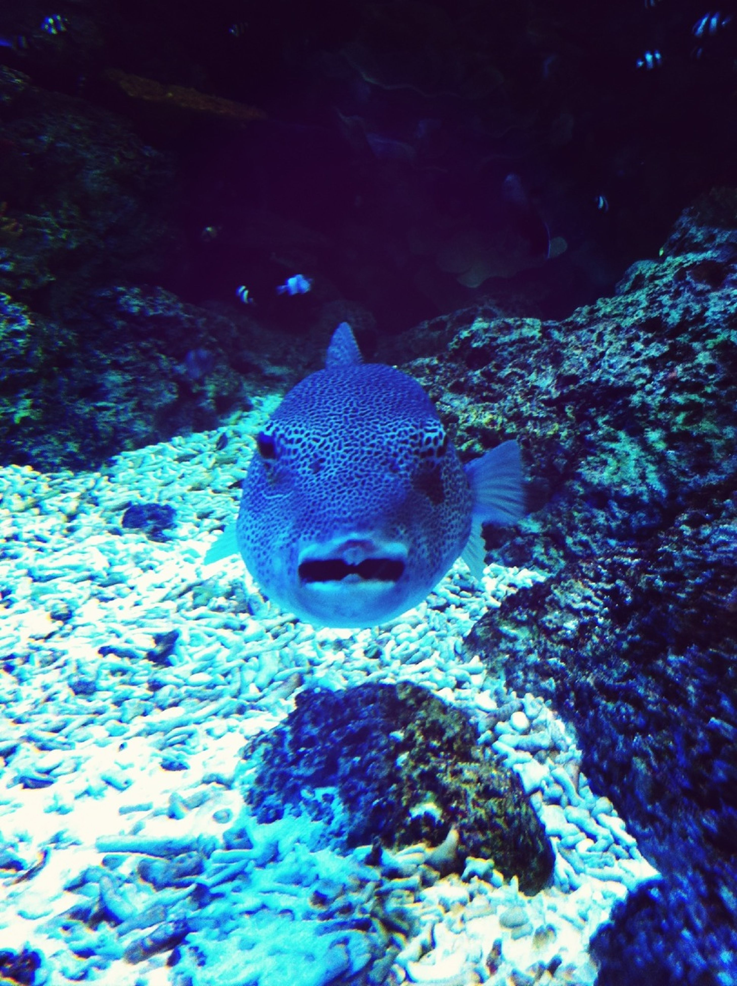 animal themes, one animal, animals in the wild, wildlife, underwater, blue, water, swimming, sea life, close-up, rock - object, nature, animal head, animals in captivity, no people, fish, outdoors, zoology, beauty in nature, undersea
