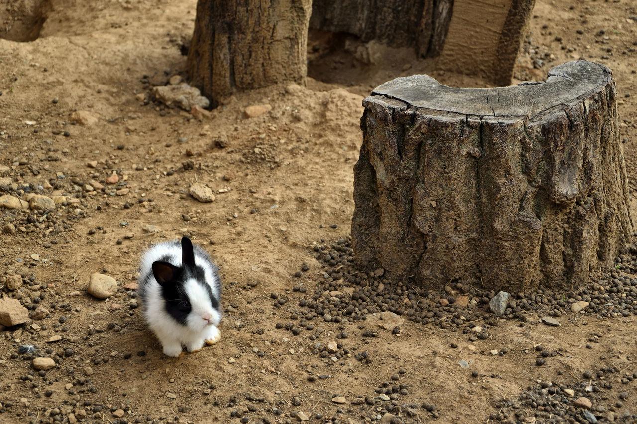 Coniglietto Coniglio Little Little Rabbit Rabbit Rabbit ❤️ Rabbits Rabbits 🐇 Zoology
