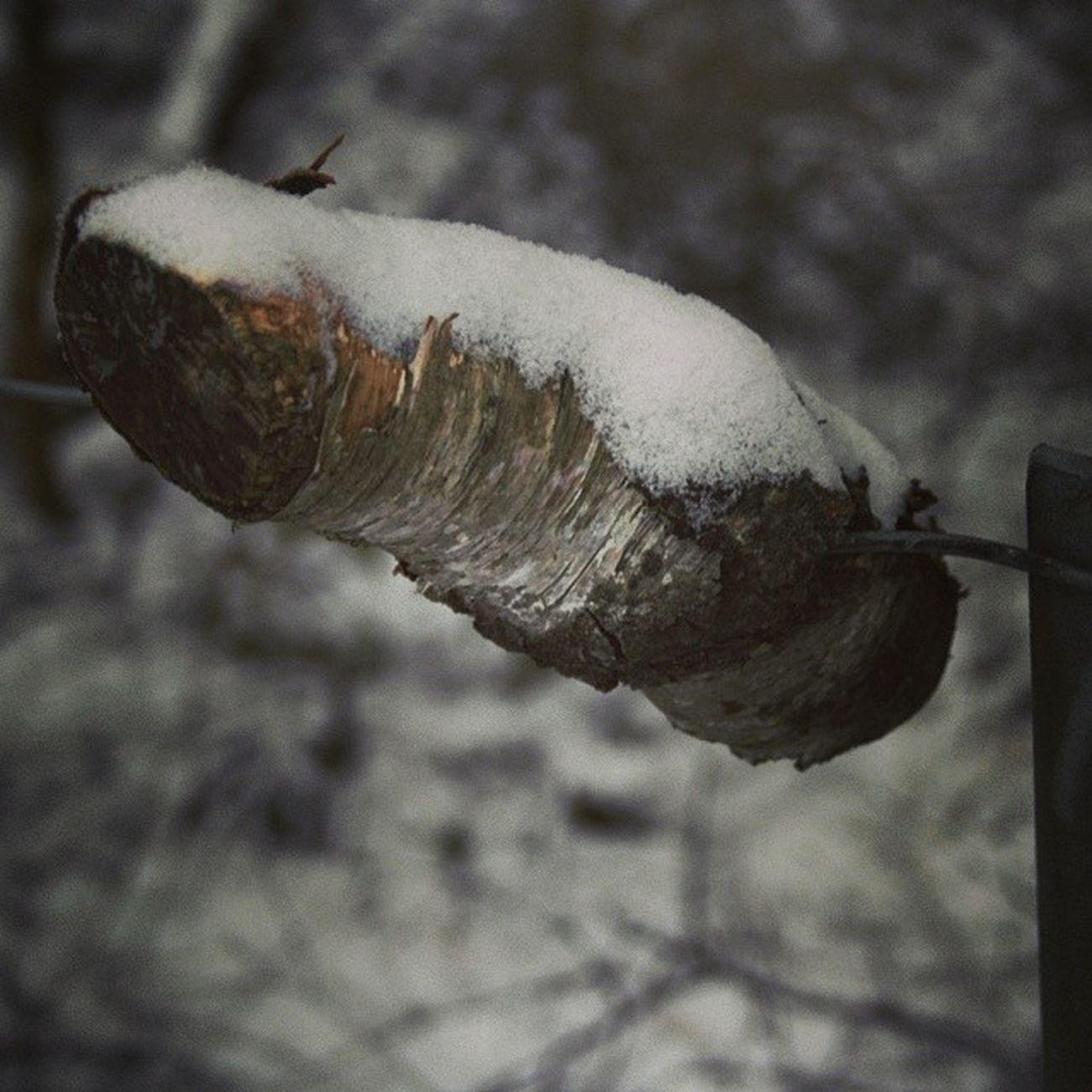 Ilovenorway Ilovenorway_akershus Follo  ås worldunion wu_norway winter frost snow ig_world ig_norway ig_week macro