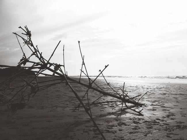 枯枝 在一片 辽阔的长沙滩上。