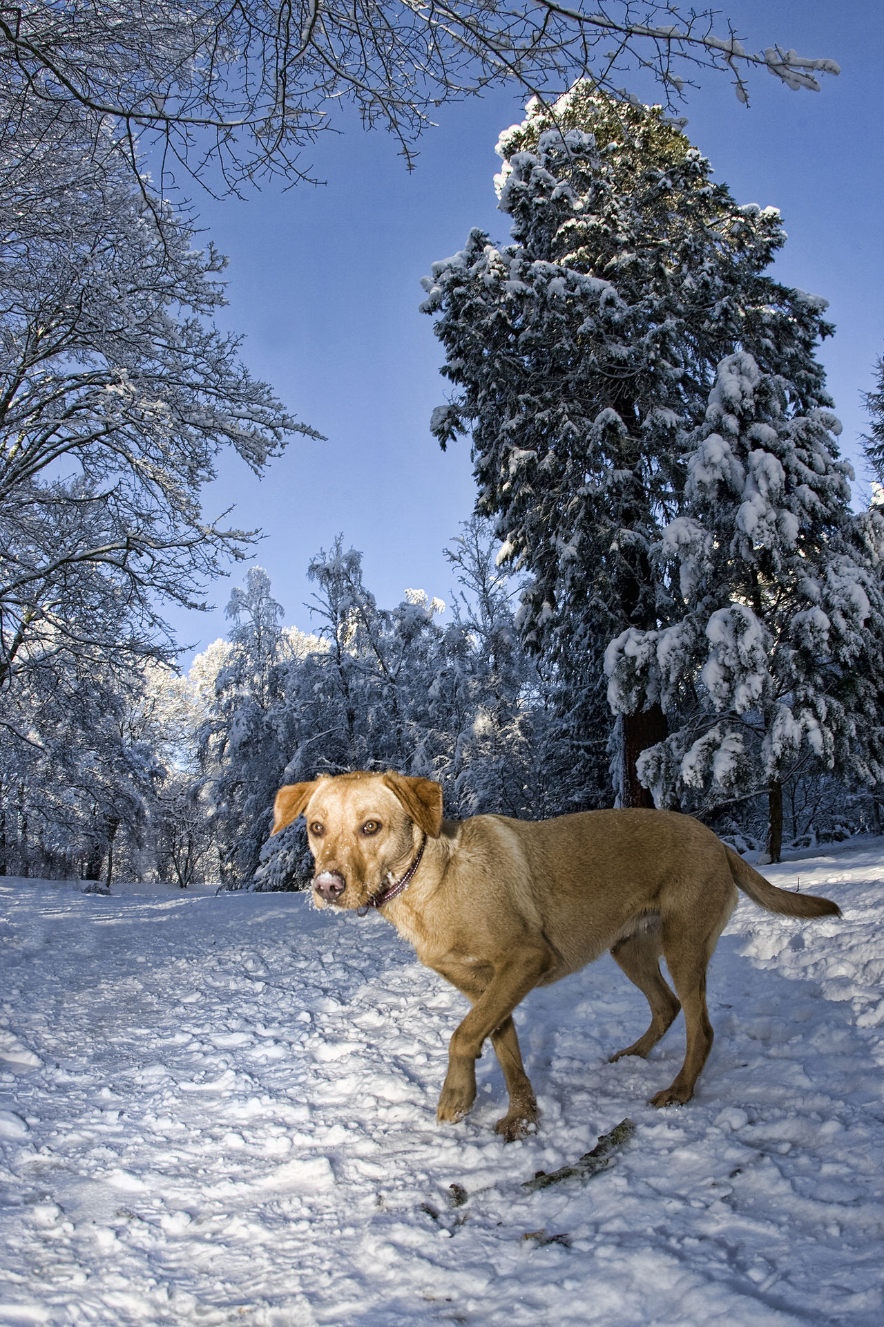 Beautiful stock photos of welpen, Animal Themes, Beauty In Nature, Canine, Carnivora