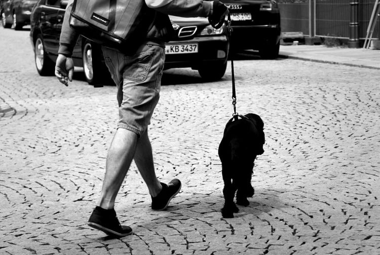Streetphotography Blackandwhite Dogs SweetLe