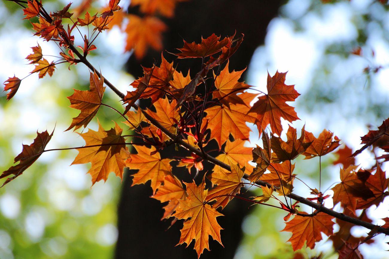 Beautiful stock photos of frühling, Autumn, Change, Close-Up, Detail