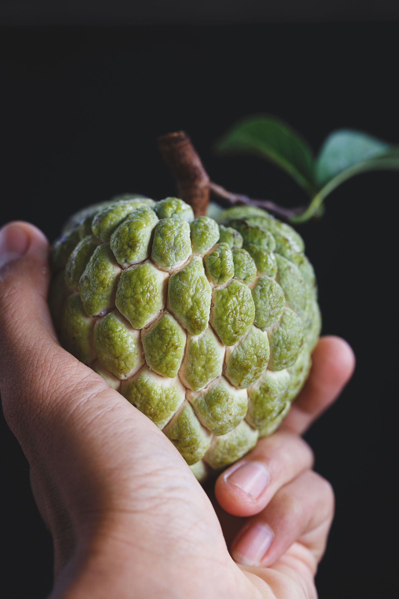 Custard apple on the my hand ASIA Bamboo Basket Burlap Custard Apple Dark Food Food And Drink Fresh Fruit Green Heathy Food Leaf Mãng Cầu Nature Old Wood Plant Raw Sweet Tasty Vietnam Vietnamese Fruit