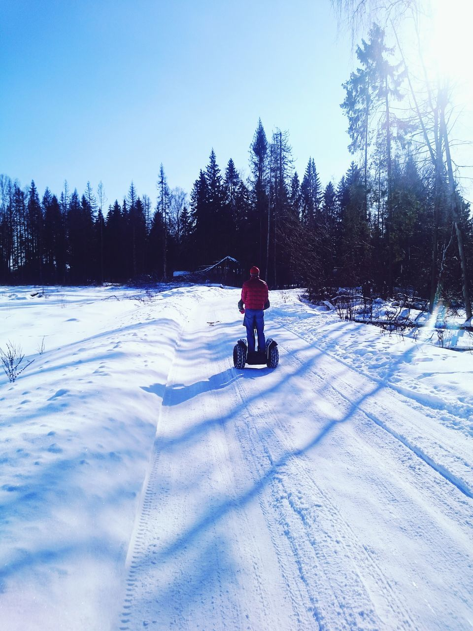 winter, snow, cold temperature, real people, one person, full length, tree, sunlight, leisure activity, nature, day, lifestyles, rear view, outdoors, riding, transportation, beauty in nature, ski holiday, warm clothing, headwear, sky, people