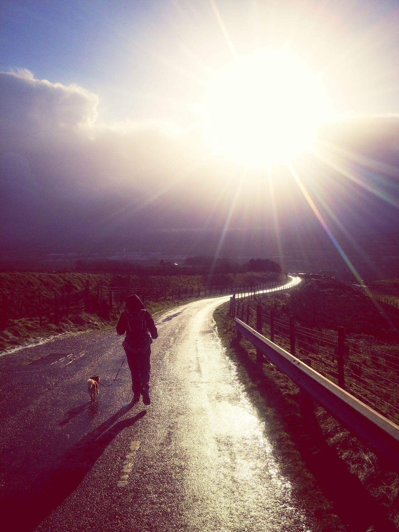 Dog Walking Dog Dog Love Dog Walking Winding Road Hills Hilking Sun Light Burst Road Path Pathways Ramble
