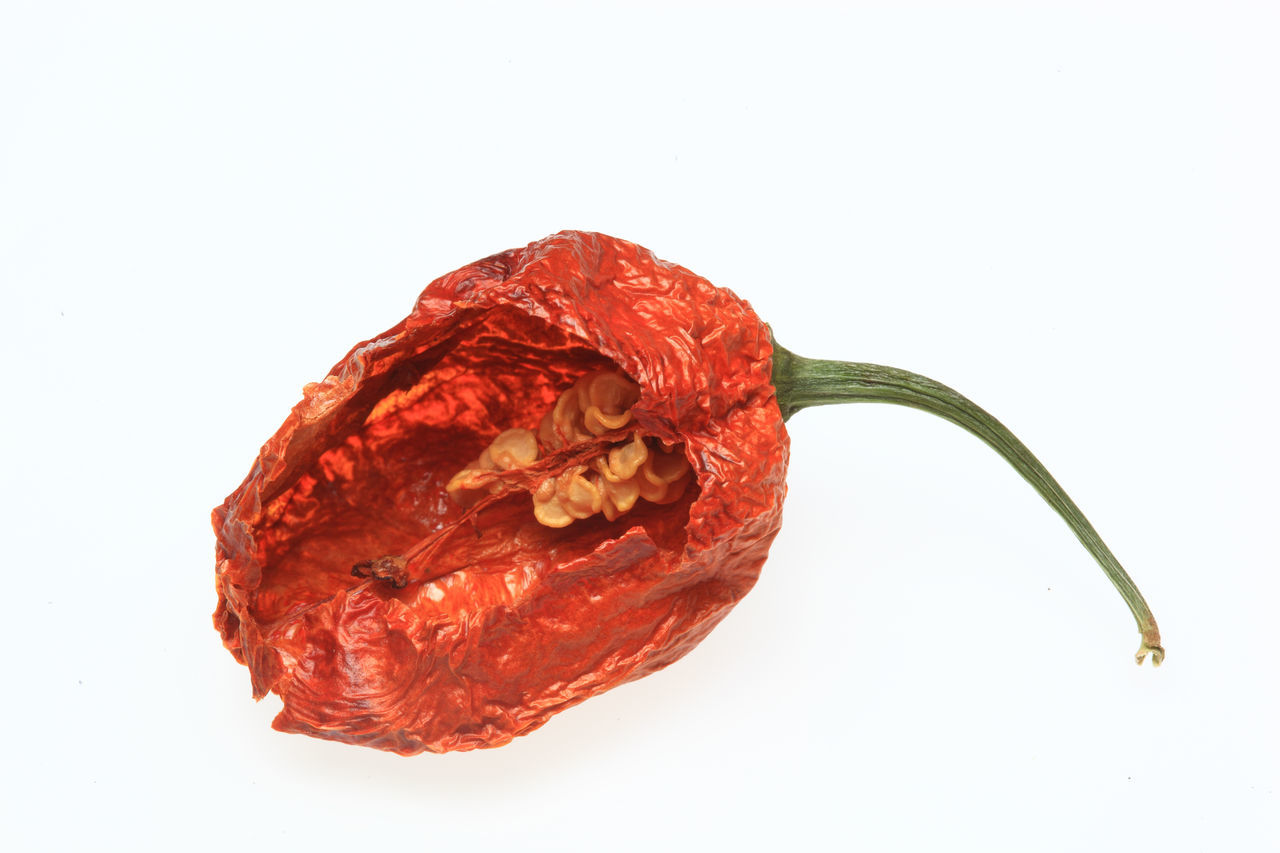 dry Chili Bhut-Jolokia or Naga-Jolokia-Chili, one of the hottest chili Beauty In Nature Bhut-Joloki Black Background Chili Pepper Close-up Cut Out Detail Fragility Freshness Leaf Vein Naga-Jolokia Natural Pattern Nature No People Petal Red Rose - Flower Single Object Stem Still Life Studio Shot White Background