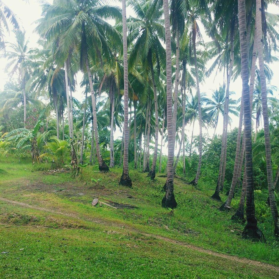 this is my place Provincelife freshair Relaxing Enjoying Life Withfamily Imissprovince Ilovemyplace Bohol Philippines Boholife Boholmoments EyeEm