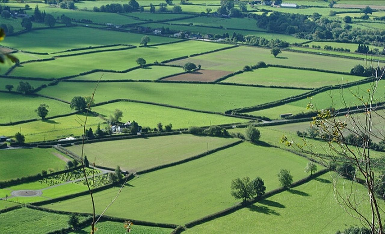 Rice Paddy Agriculture Rural Scene Field Farm Green Color Crop  Aerial View Tranquil Scene Landscape Scenics Growth Nature No People Tranquility Outdoors Beauty Rice - Cereal Plant Beauty In Nature Terraced Field