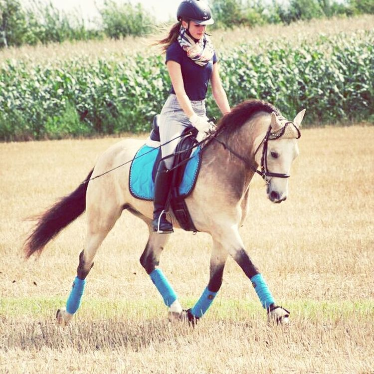 Horse Riding Riding My Horse Dressage