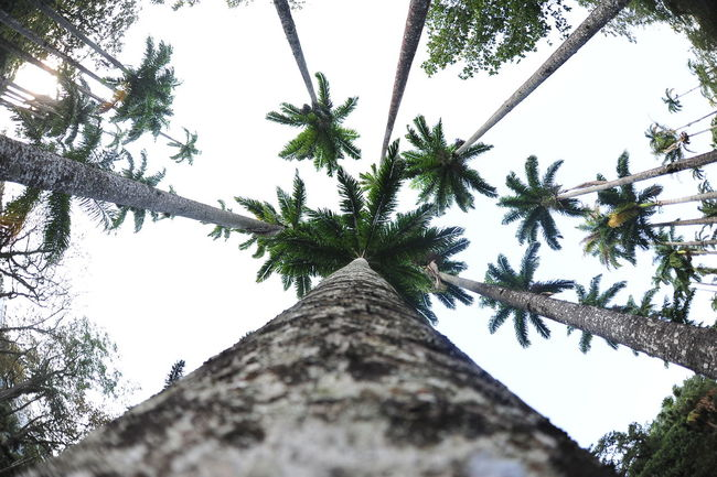 Beauty In Nature Eye4photography  EyeEm Best Shots EyeEm Nature Lover Eyeemphoto Getting Inspired Green Color Growth Hugging A Tree Lookingup Nature Palm Trees Scenics Sky Tall Tall - High Tranquil Scene Tranquility Tree