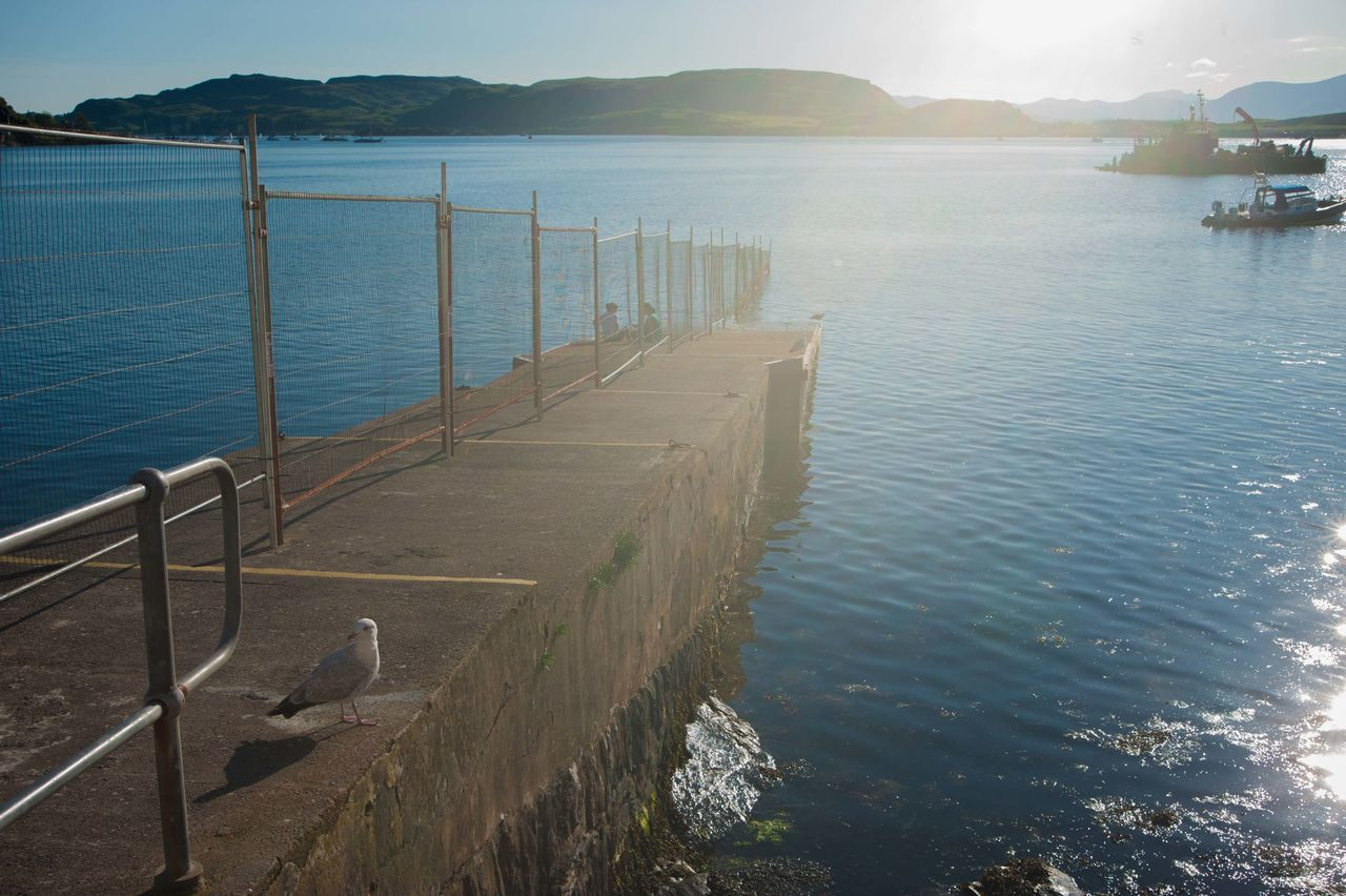 Isle of Skye, Scotland Boats Islands Isle Of Mull Isle Of Skye IsleOfSkye Nature No People Oban, Argyll, Scotland Outdoors Porvoo Scotland Seals Chilling Sheep Uig Water