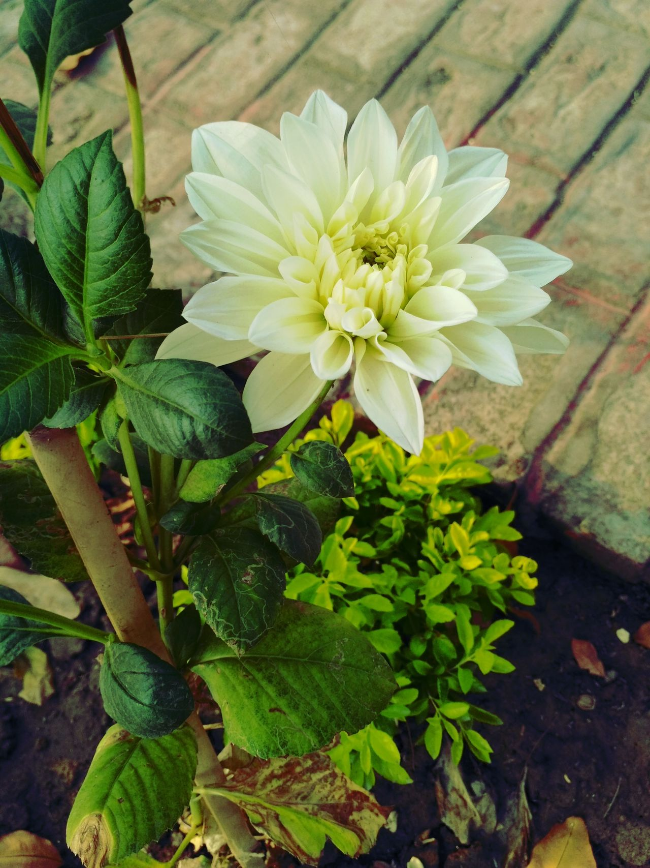 Flower Green Color Freshness Close-up Beauty In Nature Nature Plant Flower Head Fragility Leaf Petal Growth No People Outdoors Day