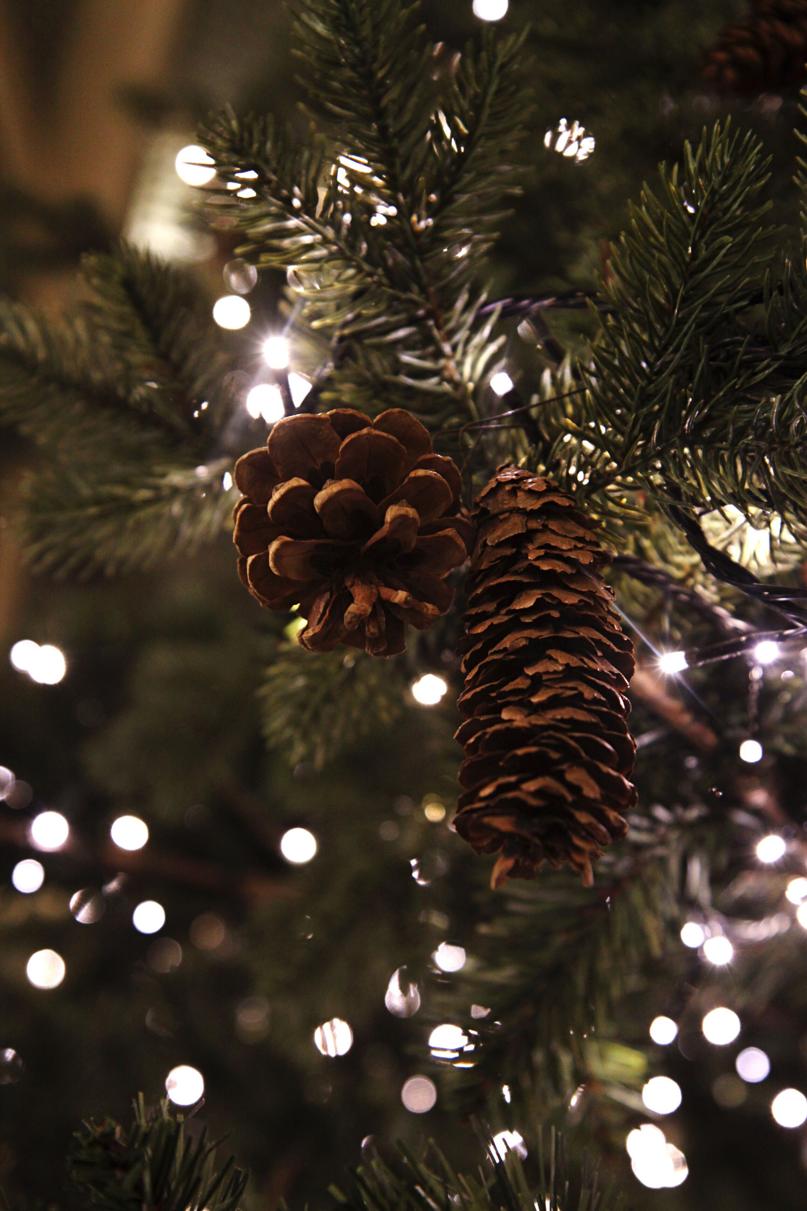 tree, christmas tree, christmas, christmas decoration, no people, low angle view, branch, close-up, nature, christmas lights, illuminated, outdoors, christmas ornament, night, sky