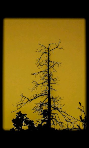 Dead tree!! Check This Out