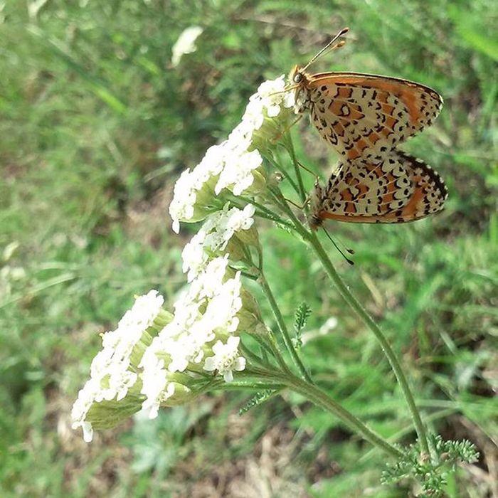 Природа зачаровує❤ Vcso Vcsoukraine Butterfly Mylove